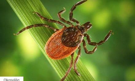 Magyar innováció hoz áttörést a Lyme-kór felismerésében